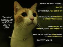 Homeless pets - NYC AC&C killed cat Sunshine