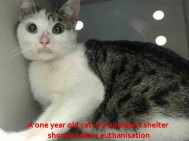 Homeless pets - NYC AC&C killed shelters cat one year old