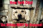 Homeless pets - NYC AC&C killing must be stopped