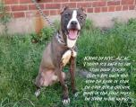 Homeless pets - NYC AC&C killled Rocky and his sister