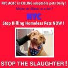 Homeless pets - NYC AC&C Mayor Bill De Blasio 04