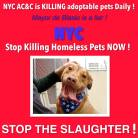 Homeless pets - NYC AC&C Mayor Bill De Blasio 04
