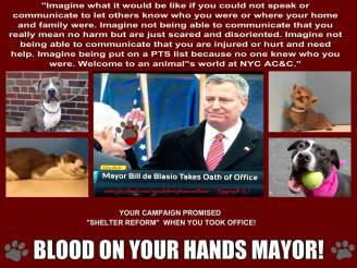 Homeless pets - NYC AC&C Mayor Bill De Blasio 07