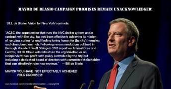 Homeless pets - NYC AC&C Mayor Bill De Blasio 08