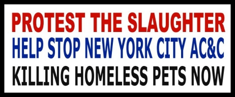 Homeless pets - NYC AC&C protest the Slaughter flag