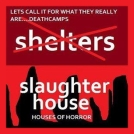 Homeless pets - NYC AC&C shelter or slaughterhouse