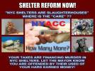 Homeless pets - NYC AC&C shelter reform