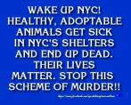 Homeless pets - NYC AC&C wake up animals get sick