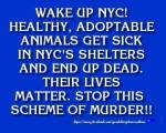 Homeless pets - NYC AC&C wake up animals get sick