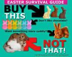 Homeless pets - Rabbits