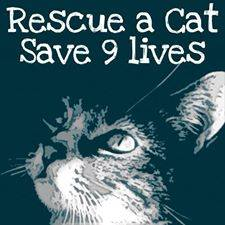 Homeless pets - Rescue a cat and save nine lives