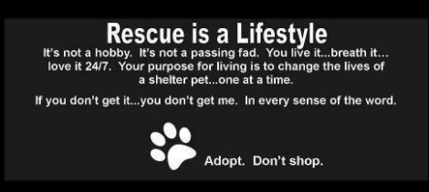 Homeless pets - Rescue is a lifestyle