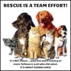 Homeless pets - Rescue is a team effort
