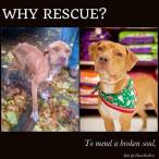 Homeless pets - Rescue why before and after