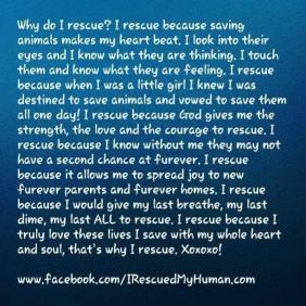 Homeless pets - Rescue why I do