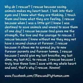 Homeless pets - Rescue why I do