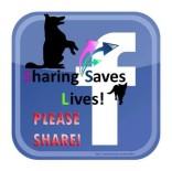 Homeless pets - Sharing saves lives