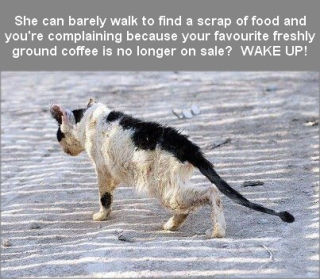 Homeless pets - She can barely walk