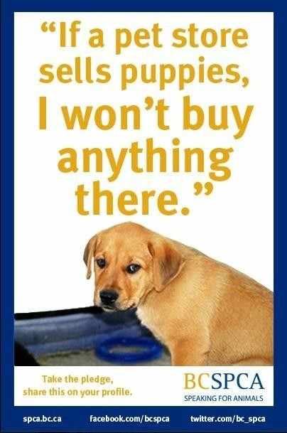 Pet store buy puppy