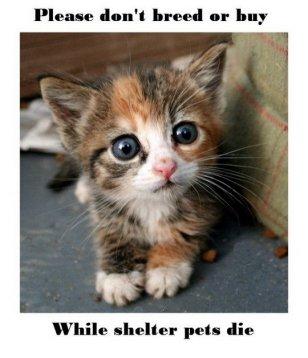 Mills farms breeders - 1 Don't buy CAT
