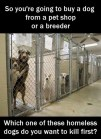 Mills farms breeders - 1 Don't buy which dog kill first USE