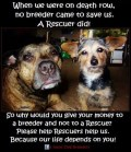 Mills farms breeders - 3 Don't buy which dog kill first USE