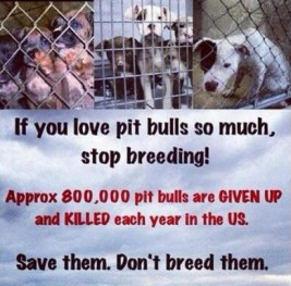 Mills farms breeders - 5 Don't buy which dog kill first USE