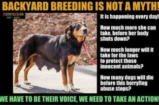Mills farms breeders - Backyard breeding is not a myth