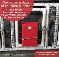 Mills farms breeders - Mums and dads of puppy farm puppies