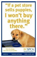 Mills farms breeders - Pet store sells puppies don't buy anything there