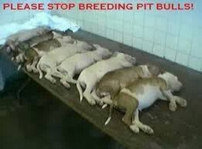 Mills farms breeders - Pit bullls stop breeding bodies