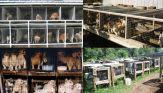Mills farms breeders - Terrible 09