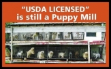 Mills farms breeders - USDA licensed is still a puppy mill