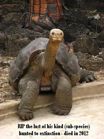 Message - Extinction turtle sub-species the last one of his kind who died in 2012.jpg
