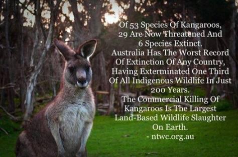 Misc - Kangaroo stats