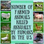 Factory farming - 500 milllion holocaust number of farm animals killed