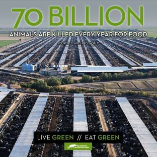 Factory farming - 70 billion animals killed per year