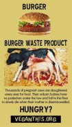 Factory farming - cattle burger waste product dead calves