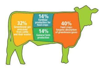 Factory farming - cattle uneconomic
