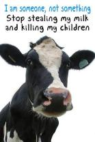 Factory farming - dairy cattle stop stealing my milk