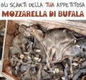 Factory farming - dairy cheese mozarella rest of your