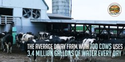 Factory farming - dairy water 3.4m galls per 700 cows