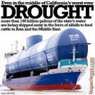 Factory farming - dairy water wasted even in drought