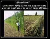 Factory farming - Hemp