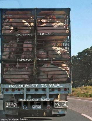 Factory farming - live export help holocaust is real