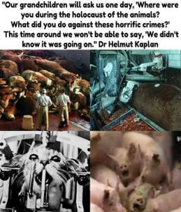 Factory farming - pigs holocaust