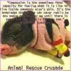 Factory farming - pigs pet tea pag compassion