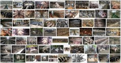Factory farming - pigs search result 03