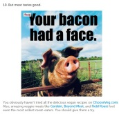 Factory farming - pigs your bacon had a face