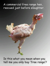 Factory farming - poultry chicken forced to moult